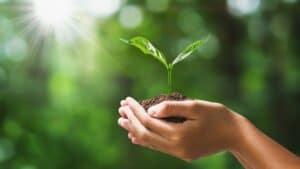 biodegradabile e compostabile differenza